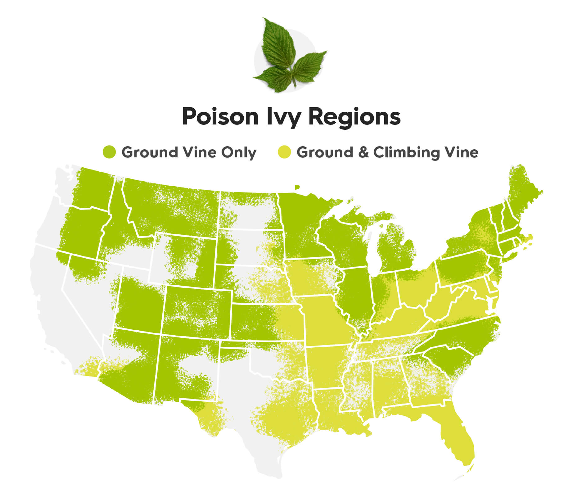 A continental U.S. map showing the regions where the two types of poison ivy grow; ground vine and ground vine with climbing vine. Keep reading to learn where to find each type. The states that only have ground vine poison ivy are: Washington, Oregon, North-eastern tip of California, Most of Idaho, Montana, Most parts of Colorado, Utah, north-western corner of Nevada, most of New Mexico and Arizona, the western and northern edge of Texas, some parts of the Dakotas, the western part of Nebraska, all of Minnesota, Wisconsin, Michigan and Illinois, most of New England, and lastly, North and South Carolina. The states that have both ground vine and climbing vine poison ivy are: the southern tip of California, the south-western edge of Arizona, the south-western edge and eastern edge of Texas, eastern part of Nebraska, Most of Iowa, Missouri, Arkansas, Louisiana, Indiana, Ohio, Kentucky, West Virginia, Virginia, Washington DC, Maryland, Delaware, Tennessee, Mississippi, Georgia, Florida, and lastly Alabama.
