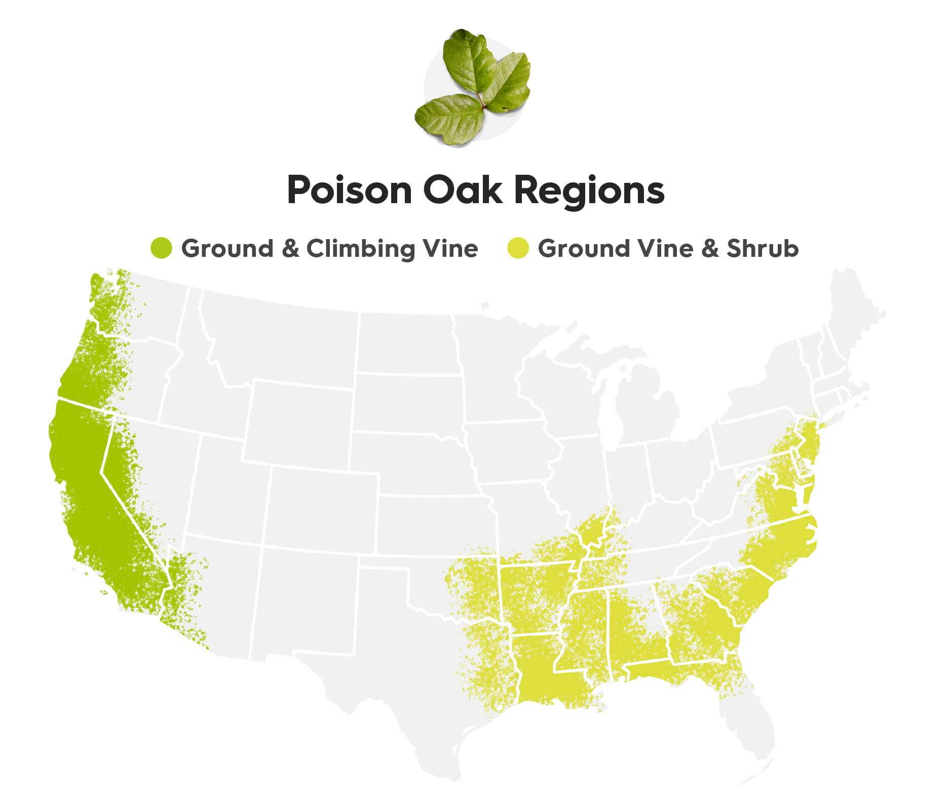 """A continental U.S. map showing the regions where the types of poison oak grow. The map key shows two groups of poison oak types; the first is """"ground and climbing vine"""" the second is """"Ground Vine and shrub"""". Keep reading to learn where to find each type. The states that have ground and climbing vine poison oak are: The western part of Washington, The western part of Oregon, California, western Nevada, and western Arizona. The states that grow ground vine and shrub poison oak are: Oklahoma, east Texas, Arkansas, Louisianan, Georgia, Alabama, Mississippi, North Carolina, South Carolina, Northern Florida, Eastern Virginia, and Maryland, D.C., Delaware, New Jersey, and eastern Pennsylvanian."""